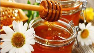 Photo of دراسة طبية: العسل أفضل من المضادات الحيوية لعلاج هذه الأمراض